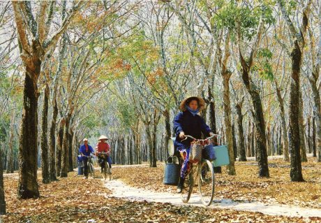 Ảnh: Nguyễn Thị Thanh Sơn