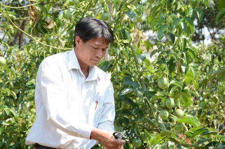 Anh Đỗ Minh Tiến kiểm tra hệ thống tưới nhỏ giọt tại trang trại chanh dây