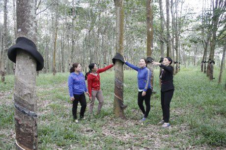 Chị Hương (thứ hai từ phải sang) đang hướng dẫn kỹ thuật trồng cao su cho chị em