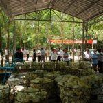 Vườn cây cao su Campuchia – Lào: Hướng đến năng suất cao, bền vững