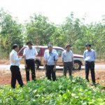 Tái canh trồng mới: Điểm sáng Cao su Phú Riềng