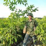 Quản lý nông nghiệp cần linh hoạt hơn