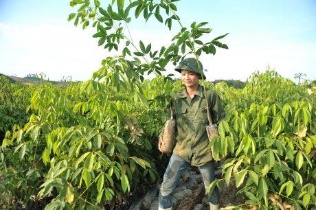 Công tác nông nghiệp năm 2017 gặp nhiều thuận lợi. Ảnh: Tùng Châu