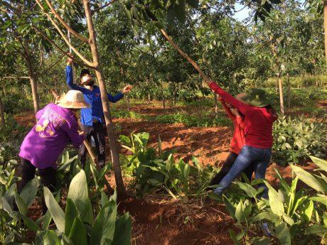 Thanh niên công nhân công ty khắc phục vườn cây bị ảnh hưởng do bão số 3.