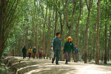 Ảnh: Nguyễn Ngọc Hải.