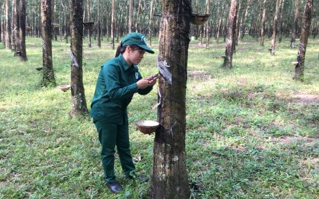 Chị Phan Thị Doanh với công việc thường ngày trên vườn cây
