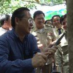 Cao su Chư Păh mở miệng cạo tại Campuchia