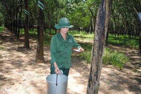 Chị Trần Thị Dung trên vườn cây.