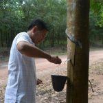 Phước Hòa Kampong Thom quản lý tốt công tác khai thác