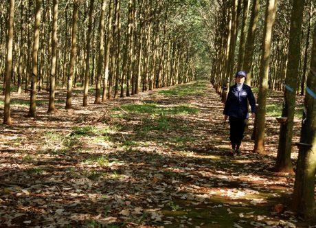 Vườn cây Công ty CPCS Bà Rịa. Ảnh: Vũ Phong