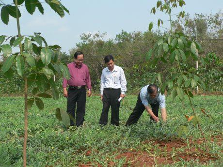Lãnh đạo Công đoàn kiểm tra vườn cây trồng xen canh.
