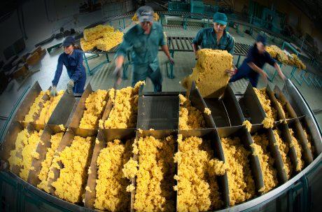 : Kim ngạch xuất khẩu mặt hàng cao su từ năm 2006 đến nay luôn đạt trên 1 tỷ USD.