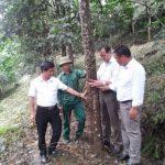 Cây cao su góp phần giảm nghèo trên đất Yên Bái