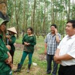 Cao su Kon Tum: Năm thứ 6 liên tiếp hoàn thành kế hoạch trước 20 ngày