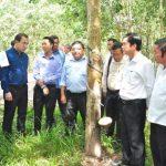 Bộ trưởng Veng Sakhon đánh giá cao dự án cao su tại Campuchia