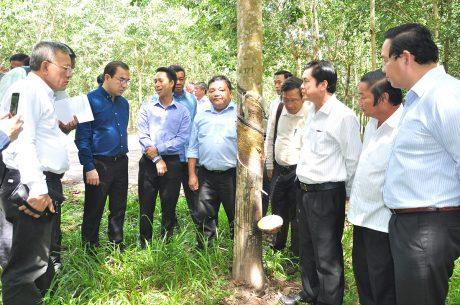 Ông Veng Sakhon – Bộ trưởng Bộ Nông lâm và Ngư nghiệp Campuchia (thứ hai từ trái sang) đi tìm hiểu vườn cây Cao su Dầu Tiếng