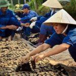 Nguồn gốc giống cao su do ông E. Rauol đưa vào Việt Nam