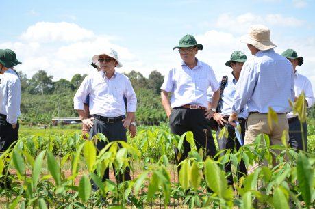 Đại biểu tham dự Hội thảo đi tham quan vườn giống của Viện NCCS VN