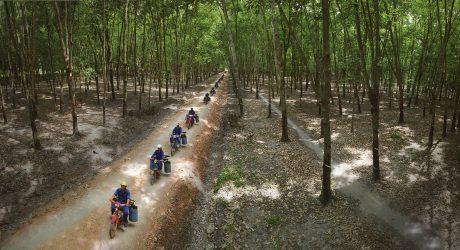 Ảnh: Nguyễn Bạch Thảo