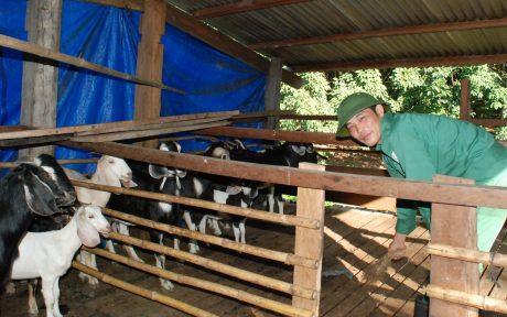 Ông Lê Minh Anh đang vệ sinh chuồng trại cho đàn dê