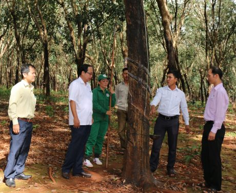 Đại diện lãnh đạo Công đoàn Công ty Cao su Phú Riềng và Nông trường 8 thăm hỏi CN Trần Thị Xoan tại vườn cây