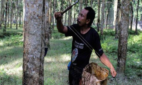 Một nông dân đang cạo mủ cao su tại tỉnh Bắc Sumatra, Indonesia. Nguồn: Maskur Has/SOPA Images/LightRocket/Getty Images.