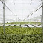 Để ngành nông nghiệp phát triển bền vững