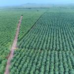 Phát triển bền vững chiến lược trọng tâm của VRG