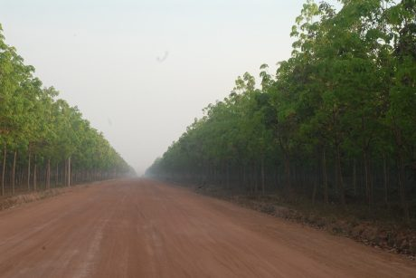 Vườn cây Công ty CPCS Chư Sê Kampong Thom