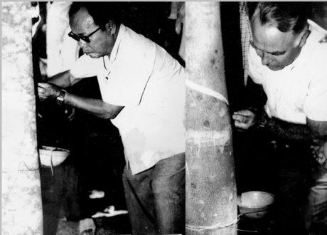 Ông Đỗ Văn Nguyện – Tổng cục trưởng Tổng cục Cao su VN và trưởng đoàn chuyên gia Liên Xô mở lát cạo đầu tiên tại lô 13, NT Đoàn Văn Tiến.