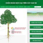 Chẩn đoán trực tuyến dịch hại trên cây cao su