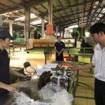 Sản xuất mủ SVR 10 chất lượng cao từ mủ phụ
