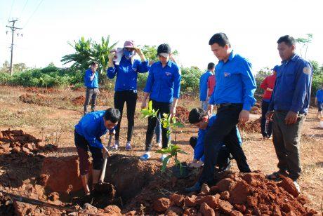 Những cây ăn quả đầu tiên đã được trồng tại vườn cây thanh niên