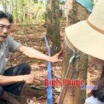 Bình Phước: Thu gom mủ tự động - sáng chế hữu ích của nhà nông Nguyễn Yên