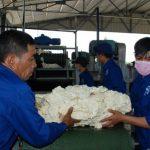 Giải pháp tiêu thụ cao su phía Bắc và Campuchia