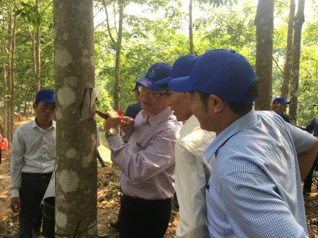 Ông Hoàng Ngọc Vinh, Chủ tịch Liên đoàn Lao động tỉnh Điện Biên thực hiện thao tác cạo mủ trong Lễ ra quân thu hoạch mủ cao su năm 2018 của Công ty Cổ phần Cao su Điện Biên.