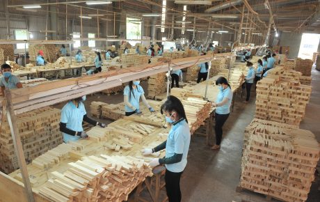 Công nhân đang làm việc tại Xưởng sản xuất gỗ phôi của công ty. Ảnh: Tùng Châu