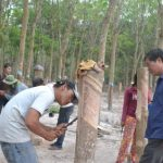 Thiếu công nhân tại Campuchia: Giải pháp nào tháo gỡ?