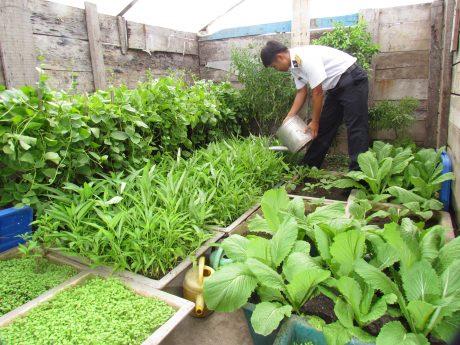 Chiến sĩ chăm sóc rau trên đảo Song Tử Tây