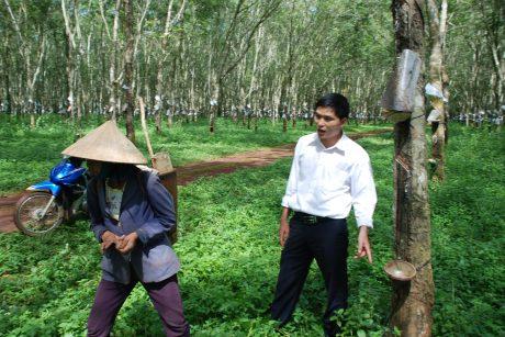 Cán bộ nông trường Công ty TNHH MTV Cao su Mang Yang ngăn chặn người dân vào lô cao su lấy mủ, vào năm 2014. Ảnh: Văn Vĩnh