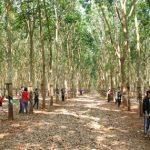 Khoán vườn cây lâu dài tạo ổn định về lao động