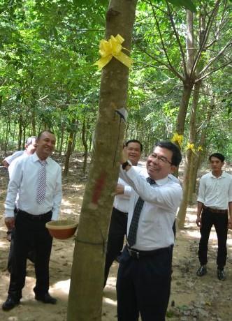 Ông Nguyễn Quốc Việt- Chủ tịch HĐTV Công ty TNHH MTV Cao su Dầu Tiếng thực hiện đường cạo đầu tiên.