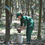 Năng suất, chất lượng vườn cây là yếu tố quyết định