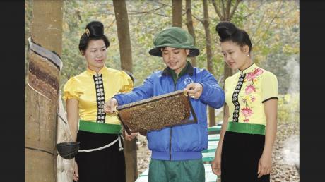Nuôi ong mật trong vườn cao su tại Nông trường Mường La