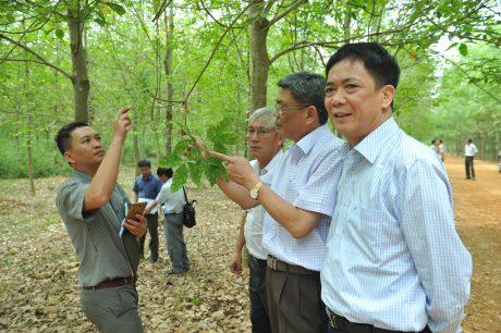 Ông Nguyễn Tiến Đức – Phó TGĐ VRG (thứ hai từ phải qua) kiểm tra bộ lá vườn cây Công ty CPCS Bà Rịa. Ảnh: Tùng Châu.