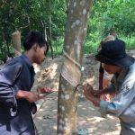 Giải pháp cho tình trạng thiếu lao động tại Campuchia