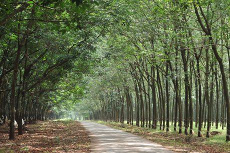 Sổ tay được xuất bản sẽ giúp chủ rừng có hướng đi đúng trong việc phát triển bền vững rừng cao su