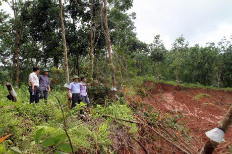 Lãnh đạo Công ty Cổ phần cao su Lai Châu và Nông trường cao su Căn Co (huyện Sìn Hồ) kiểm tra diện tích cao su bị thiệt hại