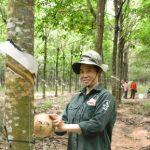 Thí điểm chuyên môn hóa vườn cây