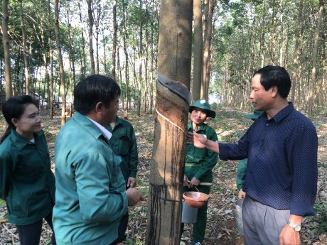 Lãnh đạo NT Bachiang 1 kiểm tra kỹ thuật trên vườn cây.